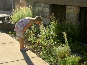 Native Plant Garden Photo