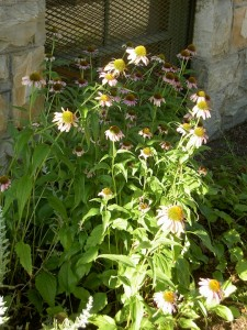 Native Plant Garden Photos