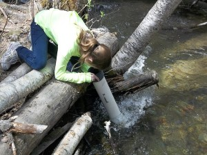 Trumbull Creek Educational Forest Photo